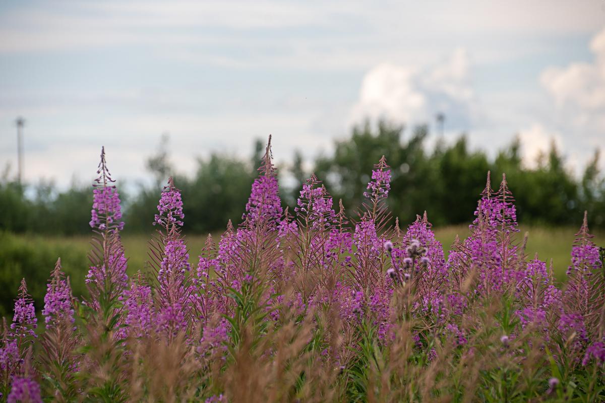 """Растения могут """"общаться"""" с помощью грунта/ фото: pixabay.com"""