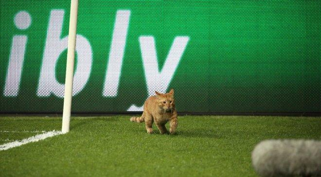Коты регулярно попадают на футбол / фото: Sky Sports