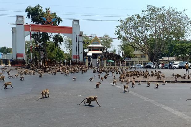 "На улицу вышли две конкурирующие ""банды"" обезьян/ Фото: Sasaluk Rttanachai/Facebook"