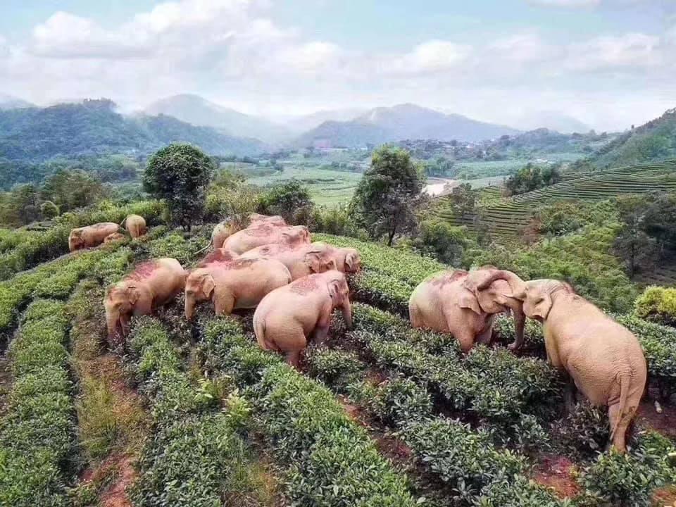 Слоны пришли в деревню в поисках еды, а нашли вино / facebook.com/Epicalyptic