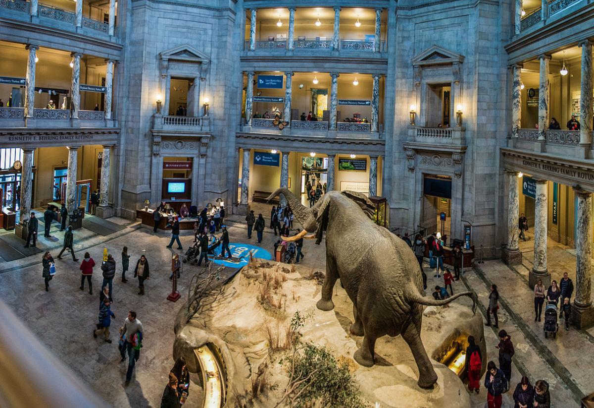 Музей природної історії у Вашингтоні