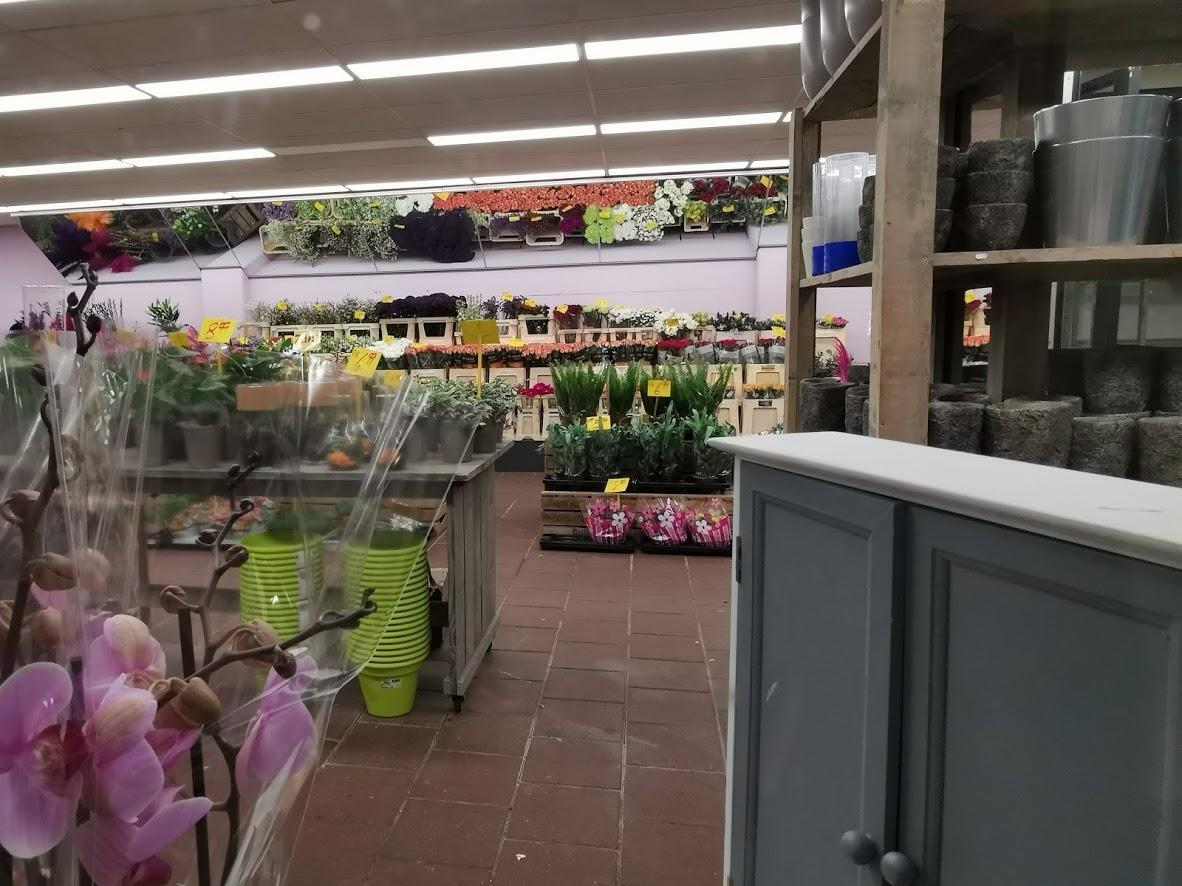 Продаж квітів у Нідерландах став наполовину / Фото надане автором