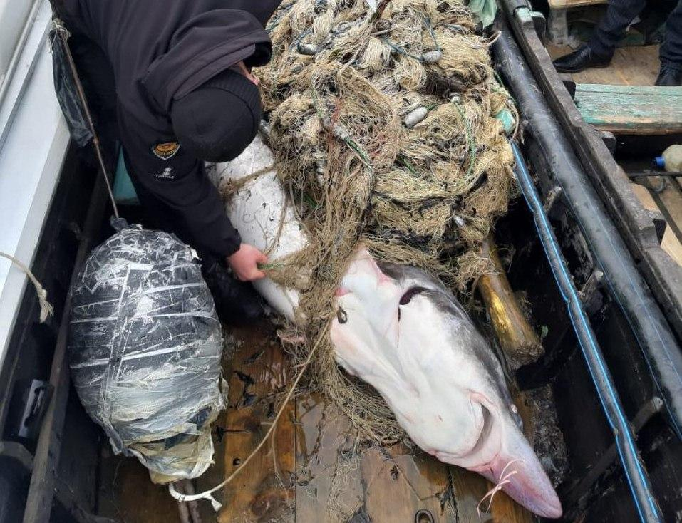 Рыба шла на нерест / фото: Игорь Перегняк
