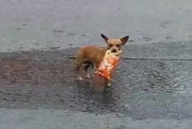 Собака виконав завдання господаря / Фото: Antonio Muñoz