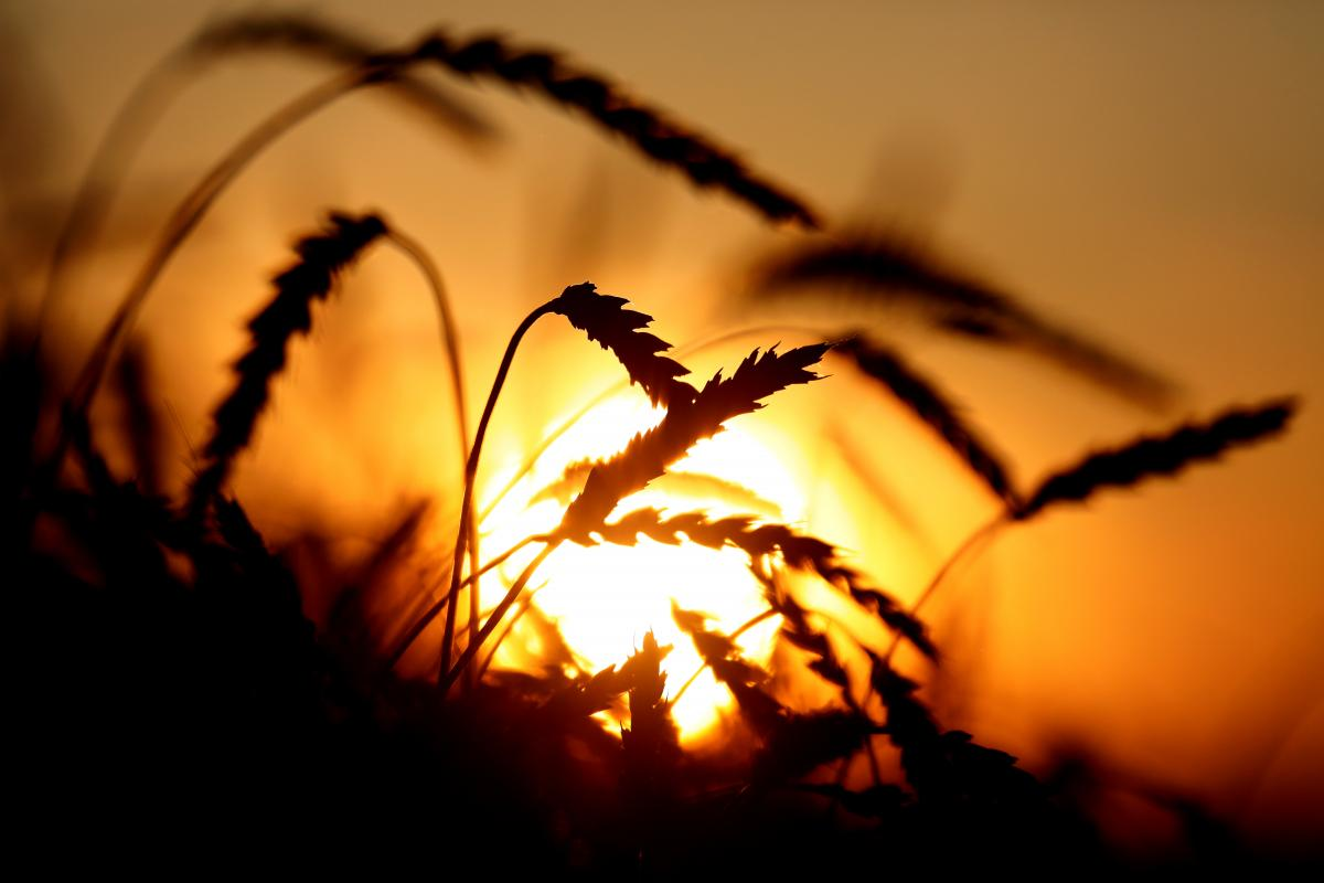 Сложные погодные условия в этом году имели негативное влияние на урожай в ряде регионов страны / Иллюстрация REUTERS