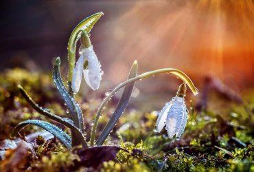 День Теплого Олекси: історія, прикмети та що прийнято робити у це свято