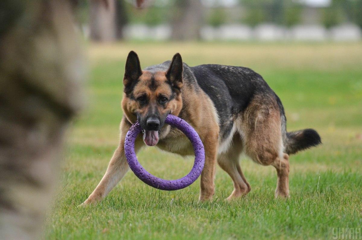 Правительство отбирает собак у должников / УНИАН