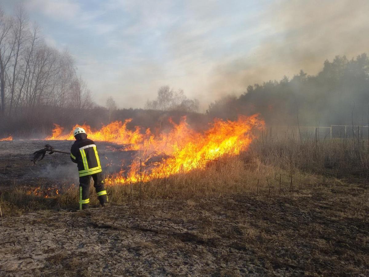 Лес загорелся от горящей сухой травы / фото zt.dsns.gov.ua