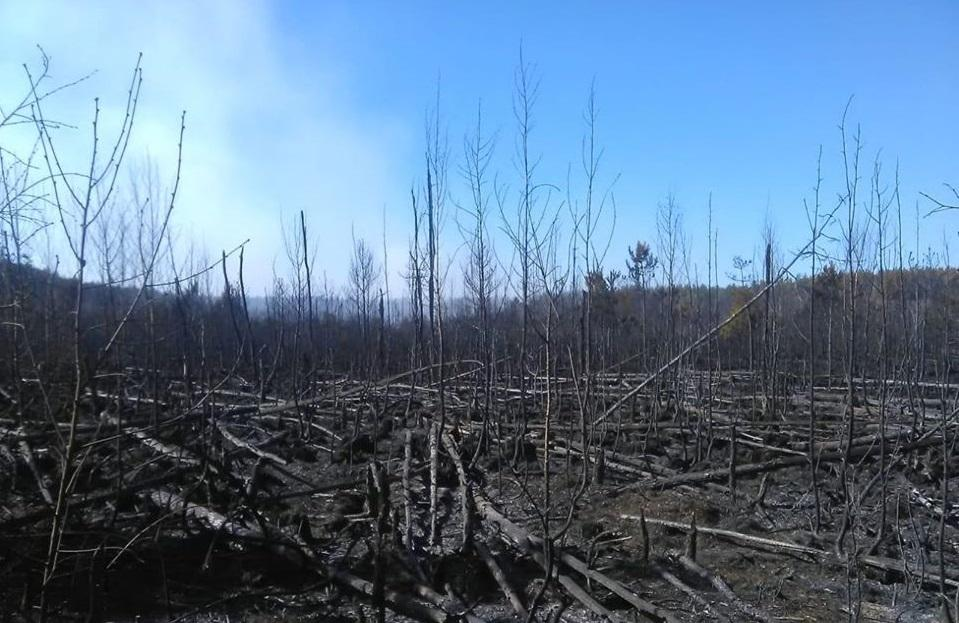 Work is under way to contain the burning of forest litter, stumps and wood/ Photo from Ukraine's Interior Ministry