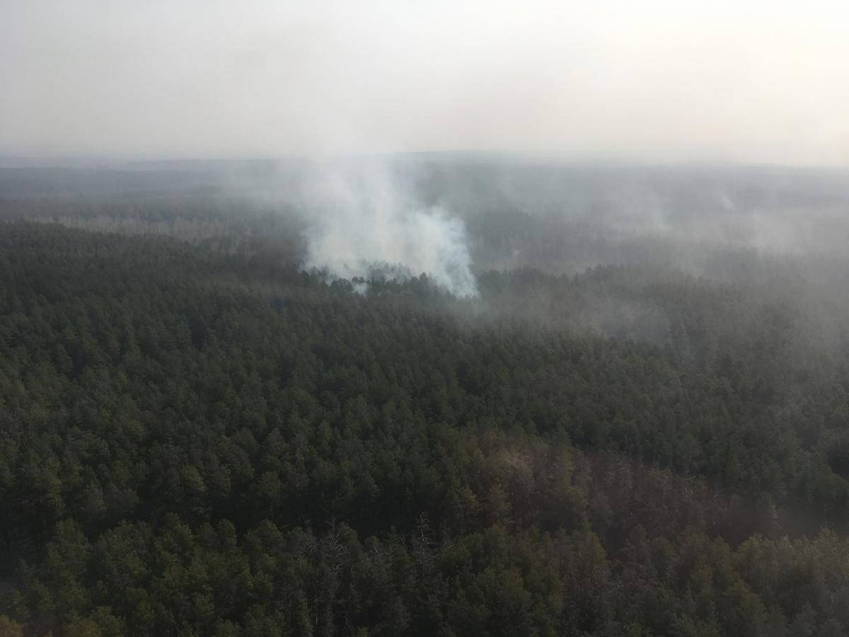 На Житомирщине произошел лесной пожар / фото: ГСЧС Украины в Житомирской области