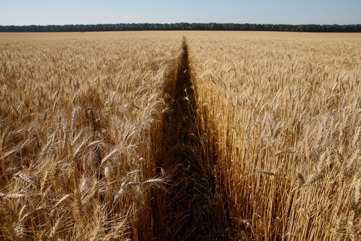 Больше всего украинские аграрии отстают в экспорте ржи / Иллюстрация REUTERS