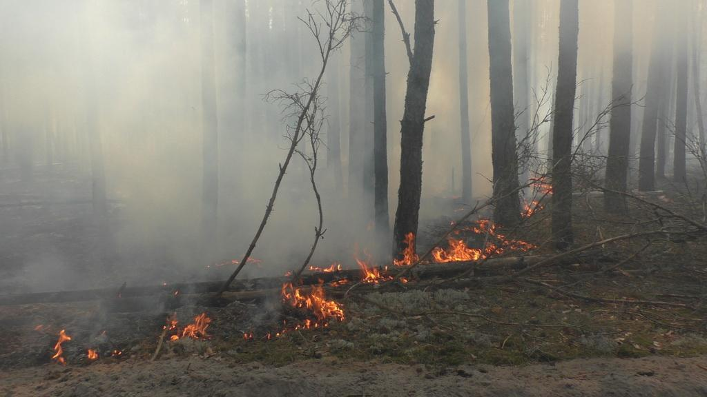 На Житомирщине горит лес / фото ГСЧС