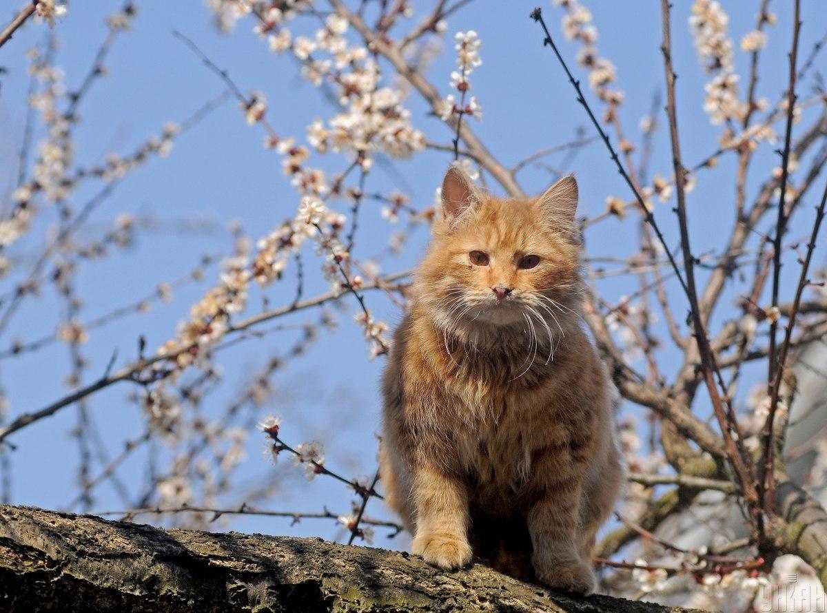 Завтра в Україні почнеться весняне потепління / фото УНІАН