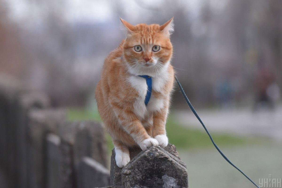 Всесвітній День кішок / фото УНІАН