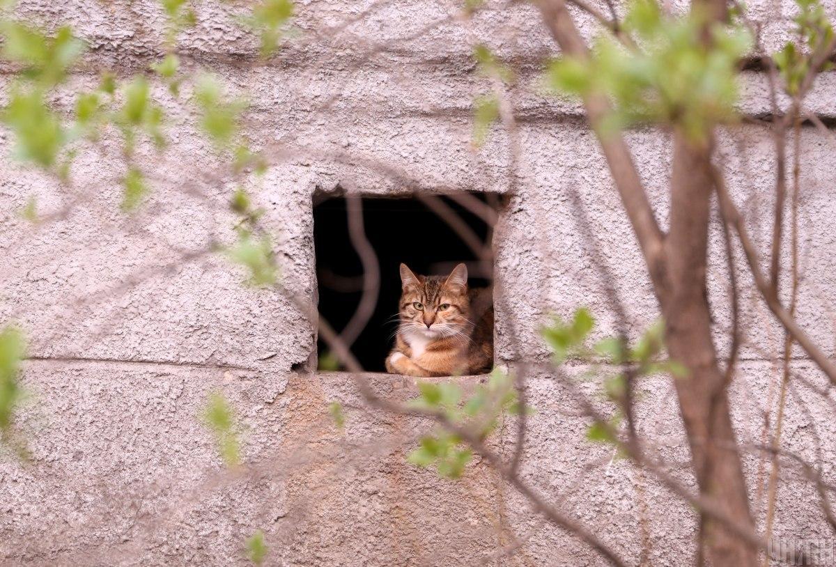 Щоб зловити тварин, поставили пастки / Фото УНІАН