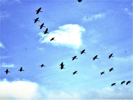 Тысячи мелких птиц не пережили перелет/ trampic.com