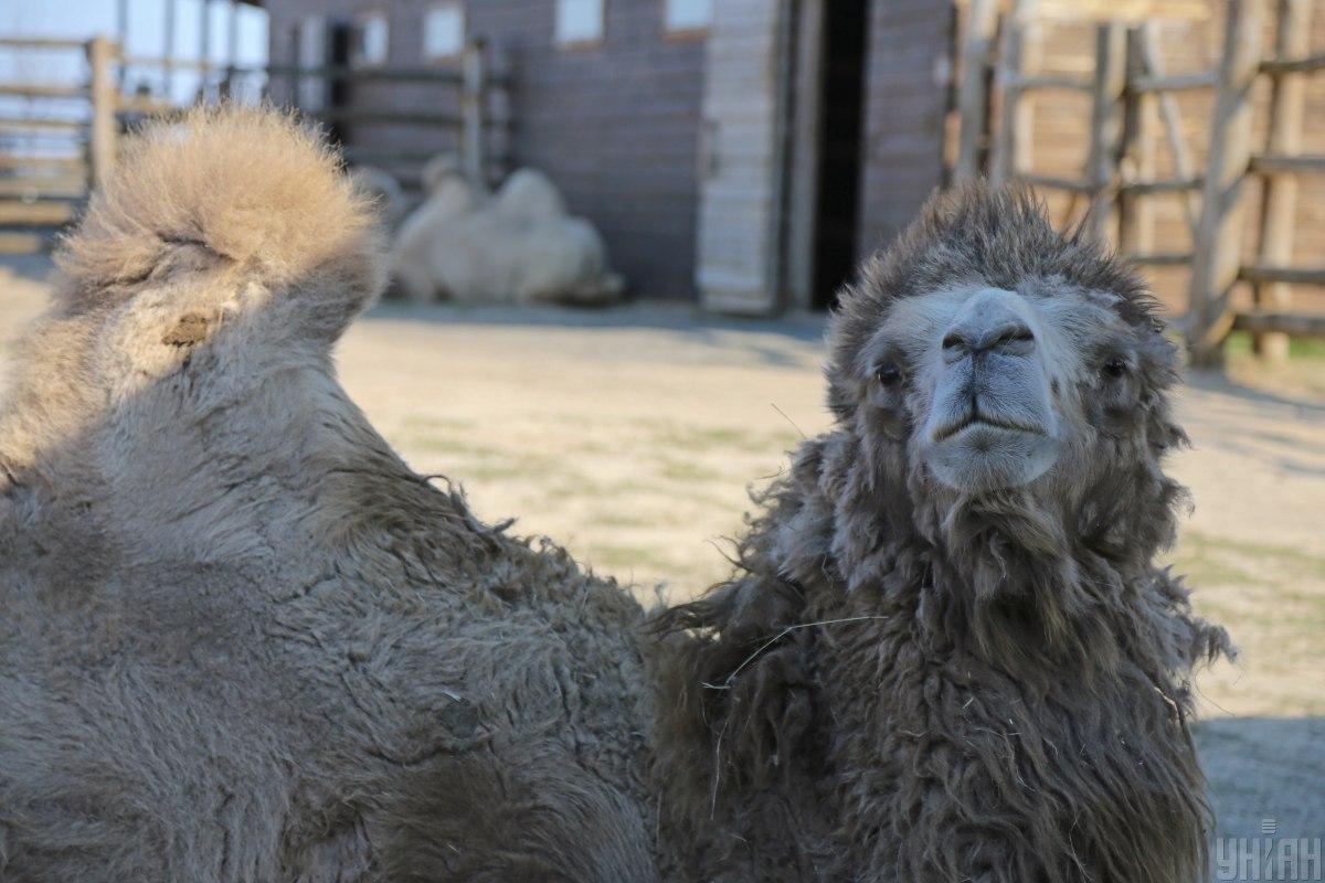 Київський зоопарк - коли запрацює / фото УНІАН