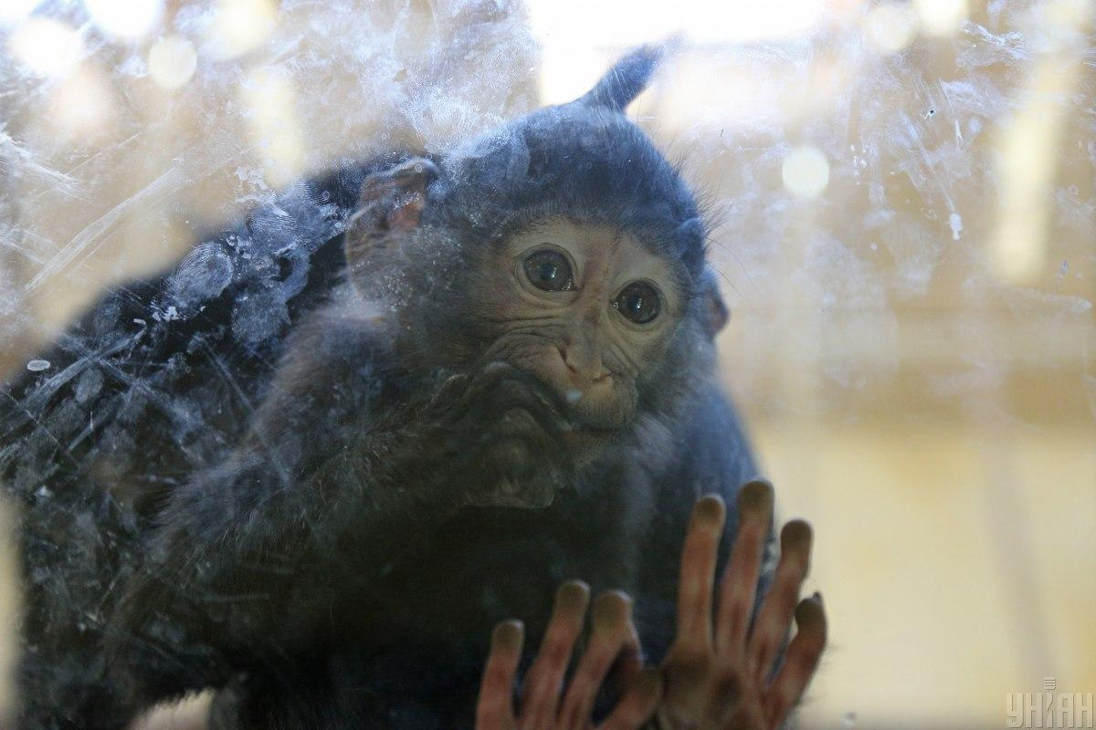 Зоопарки во время карантина закрыли / фото УНИАН