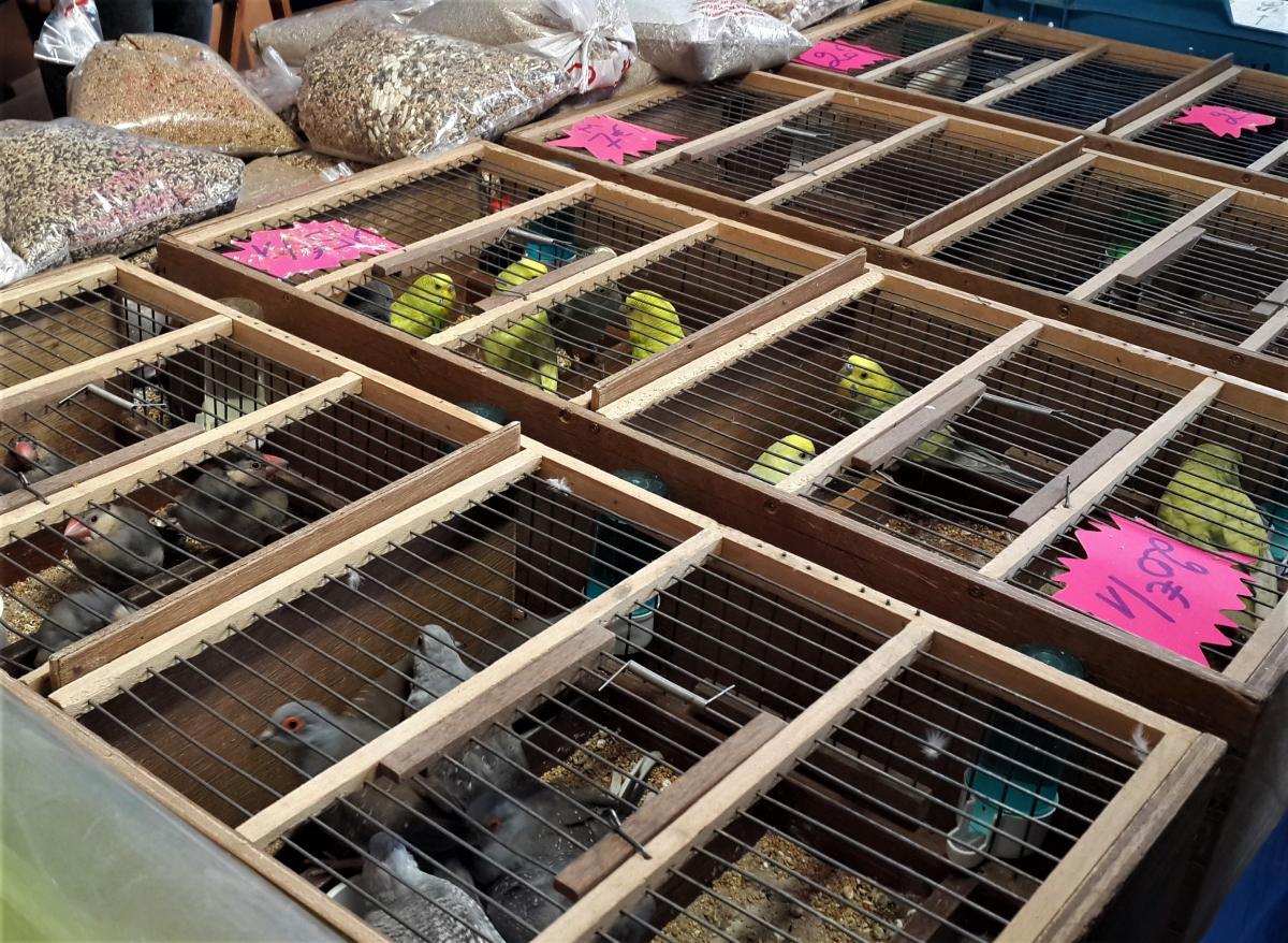 На ярмарку на набережній Льєжа можна навіть папужок прикупити / Фото Марина Григоренко
