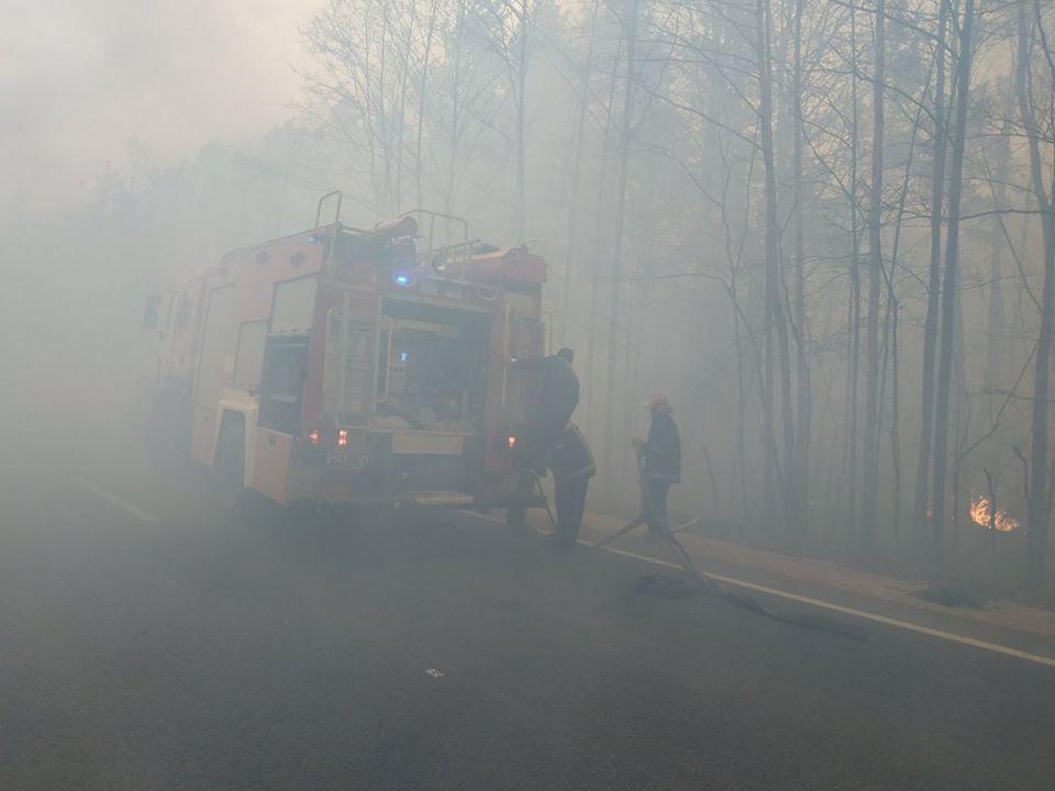 На Житомирщине горит лесная подстилка / Фото: ГСЧС
