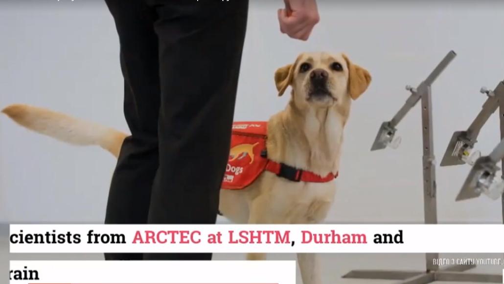 Собак дрессируют для выявления коронавирус / скриншот