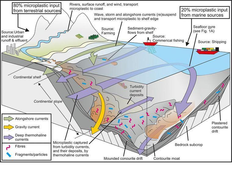 Схема скопления микропластикана дне мирового океана / фото научный журнал Science