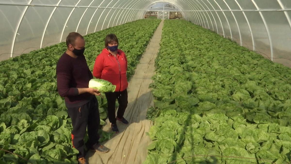 Селянам нікуди подіти ранні овочі
