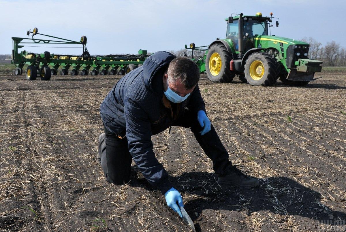 Озимой пшеницы посеяно на площади 6,03 млн га / фото УНИАН Владимир Гонтар