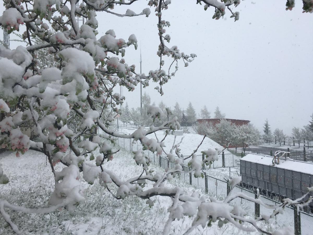 Закарпатье засыпало снегом / facebook.com/tsoua2020