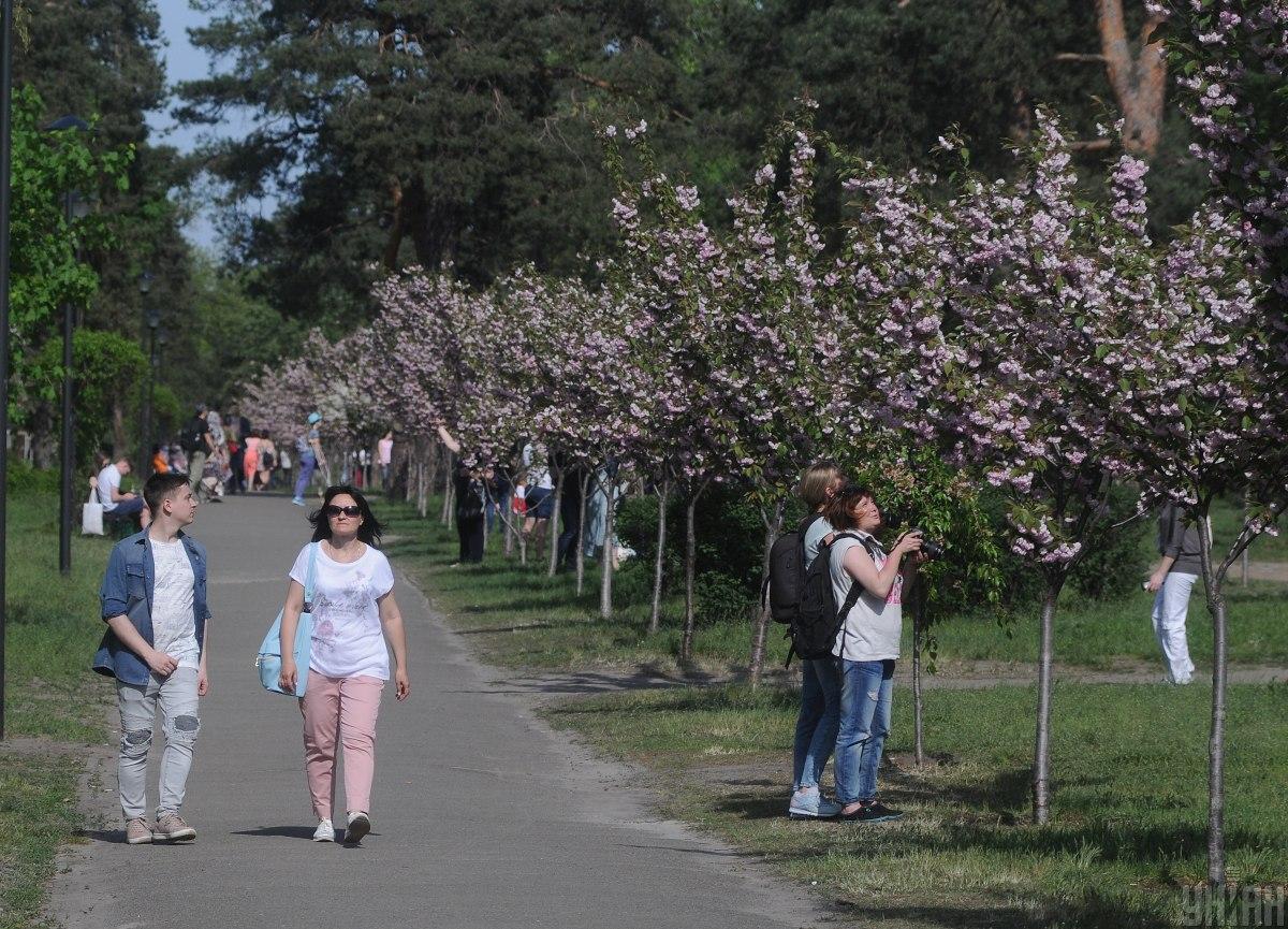 Алея сакур у парку Кіото / фото УНІАН
