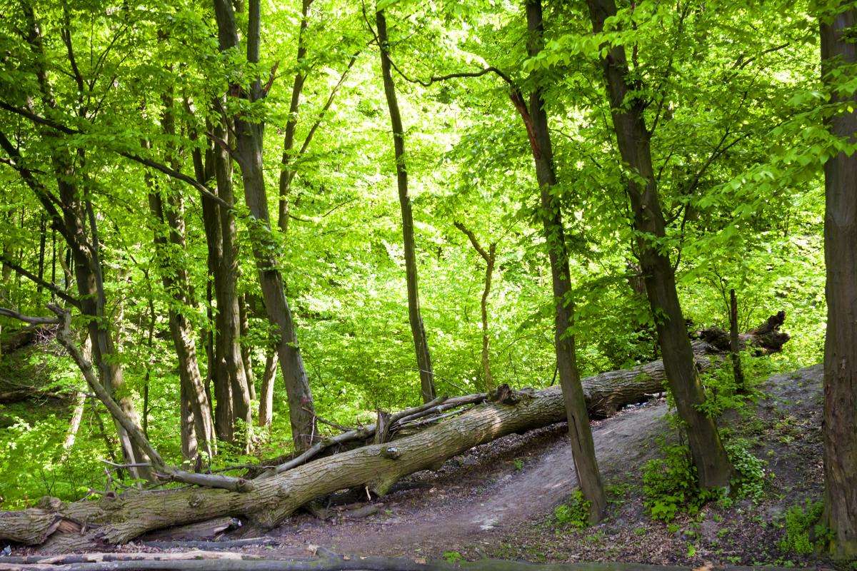 Голосіївський ліс / фото Depositphotos