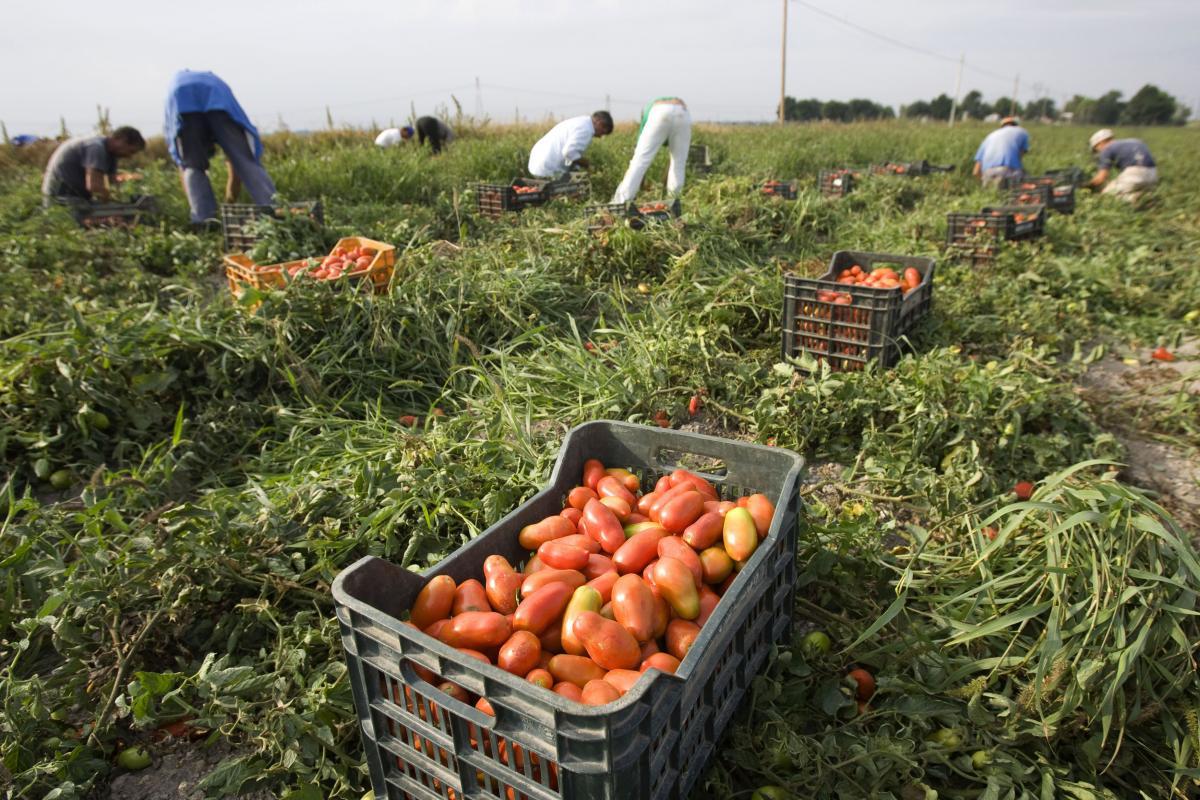 """Директор """"Українського клубу аграрного бізнесу"""" вважає, що Кабмін хоче в рази збільшити податки для сільгоспвиробників / фото REUTERS"""