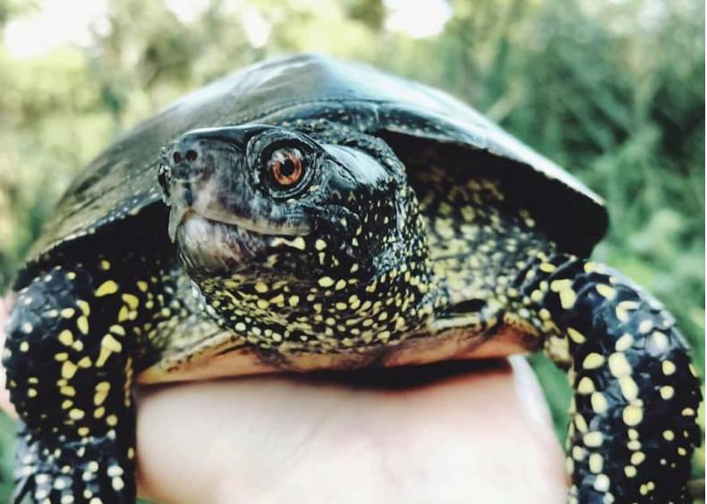 От огня пострадали черепахи / facebook.com/mary.vinogradova