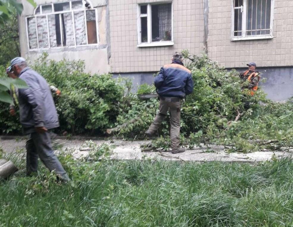 Сильний вітер повалив дерева у Львові / city-adm.lviv.ua
