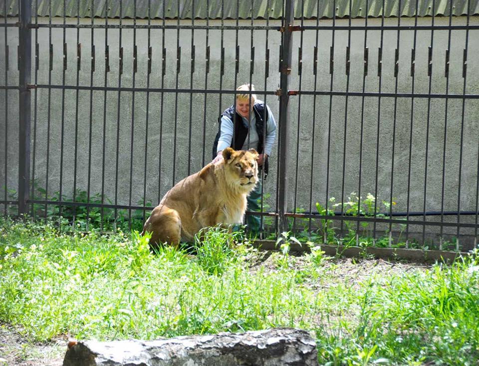 Сейчас львица Яна живет по-царски / фото Facebook Приют для диких животных