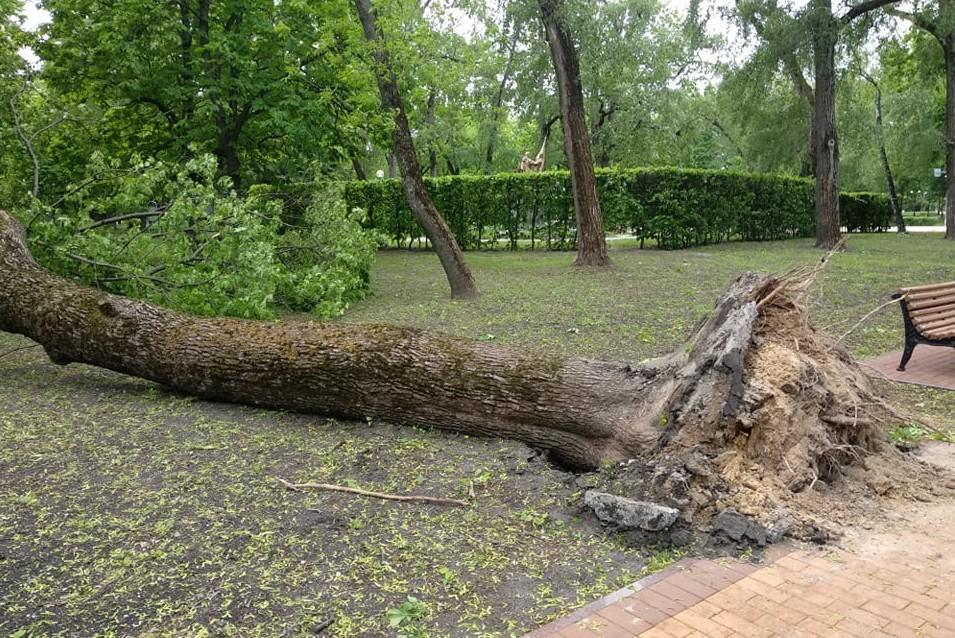 Ураган в Чернигове повалил деревья / Фото из соцсетей