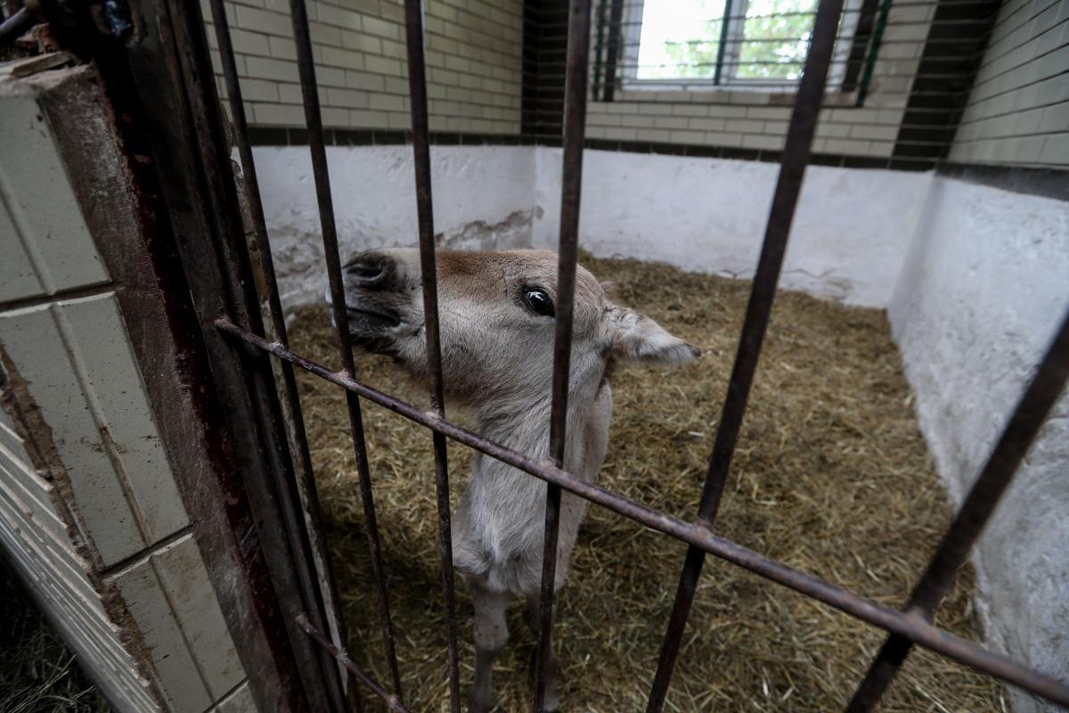 Жеребенок сильно пострадал в пожаре в Чернобыльской зоне / Фото УНИАН