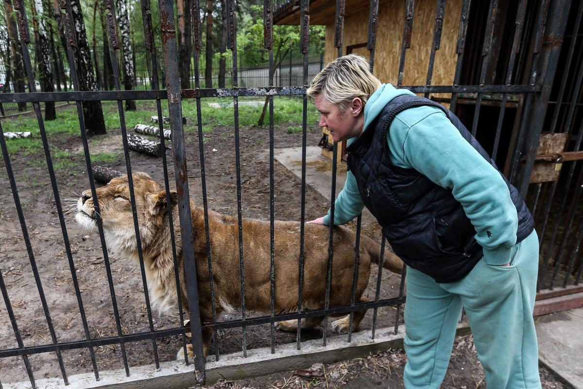 Сейчас львица даже разрешает себя гладить / Фото УНИАН