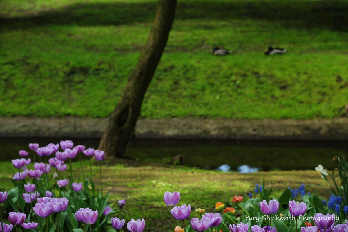 Таку красу можна знайти в парках Мінська / фото Yury Shulhevich
