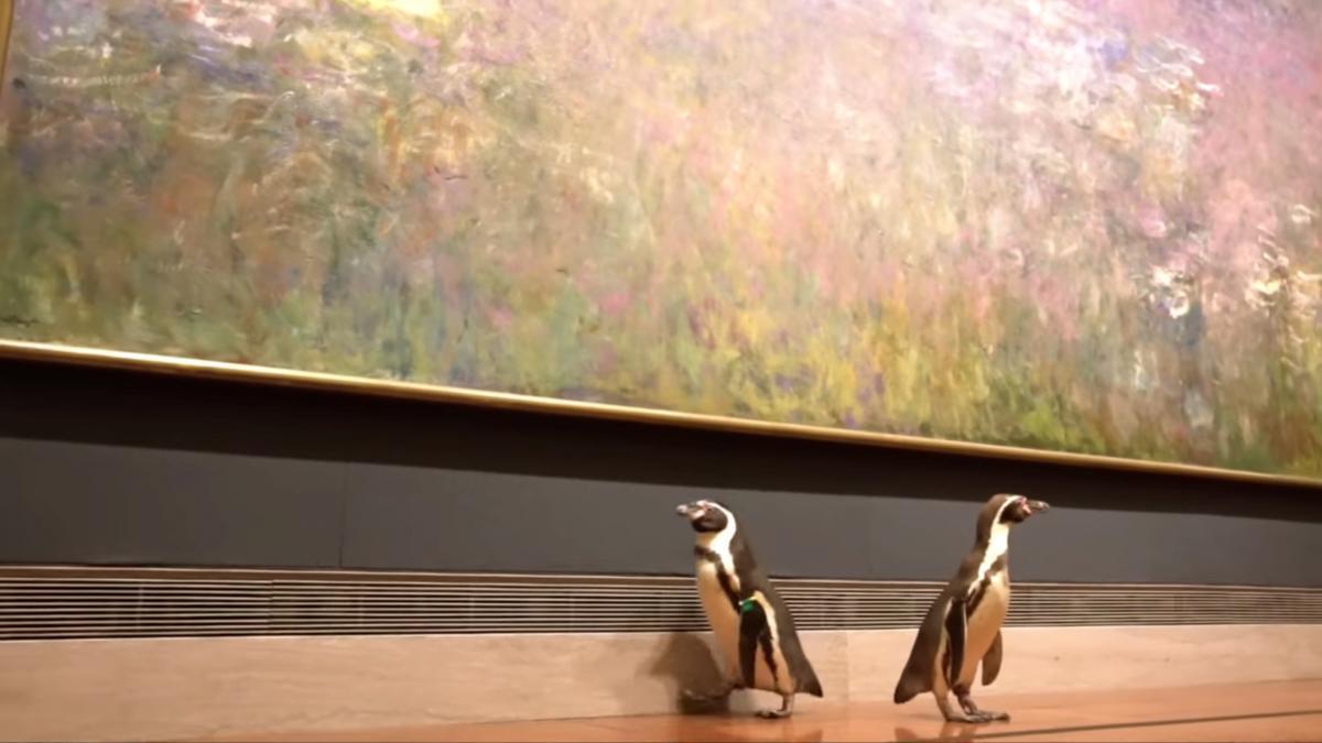 Пингвины в музее Канзас-Сити / Фото REUTERS