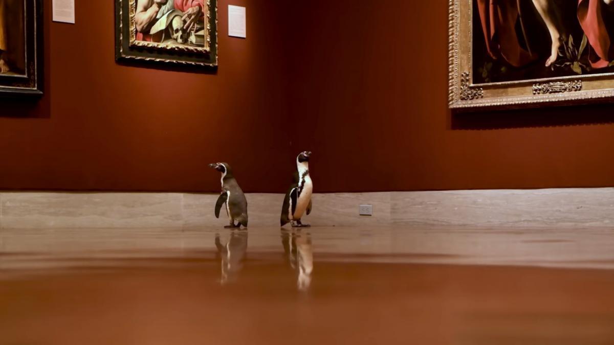 Пингвины приобщаются к прекрасному / Фото REUTERS