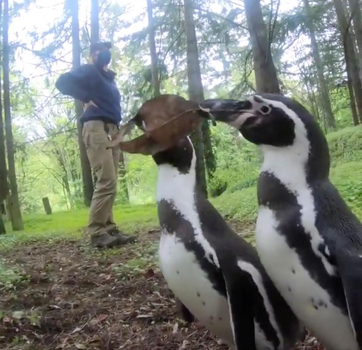 Пингвины в зоопарке Портленда / Фото REUTERS