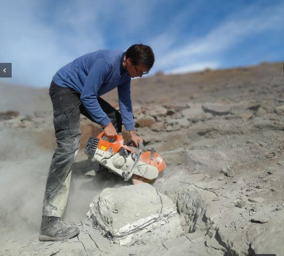 В Аргентині археологи знайшли мегараптора / Фото: macnconicet.gob.ar