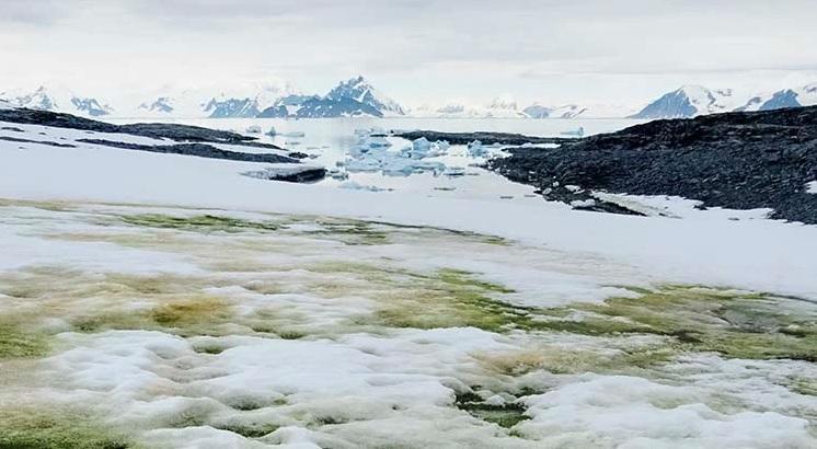 Клімат змінюється: Антарктида зазеленіла