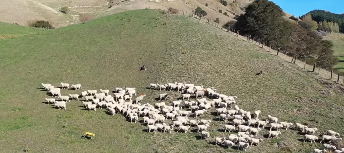 Робот научился пасти овец / скриншот