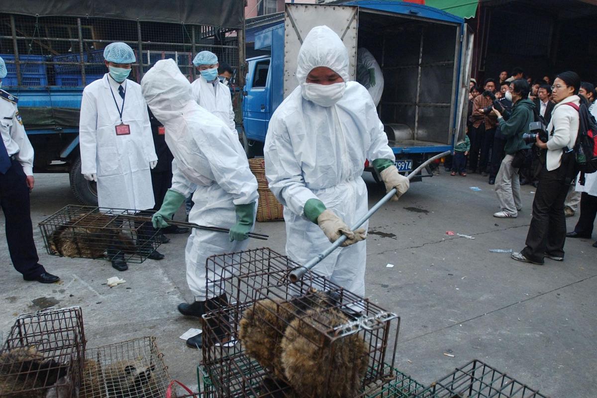 Местом возникновения коронавируса считают рынок в Ухане, где продают диких животных/ globallookpress.com