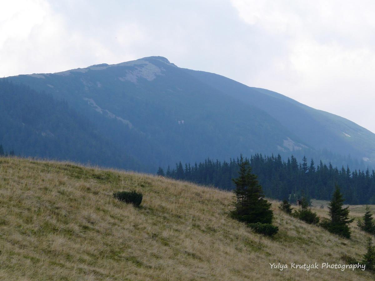 На сході Ґорґан знаходиться гора Хом'як/ фото Yulya Krutyak