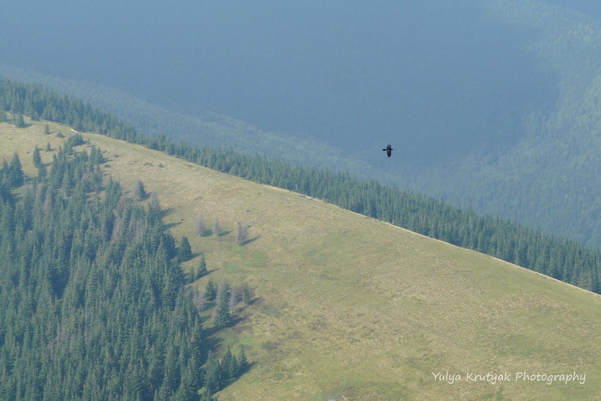 Панорами з висоти заворожують /фото Yulya Krutyak