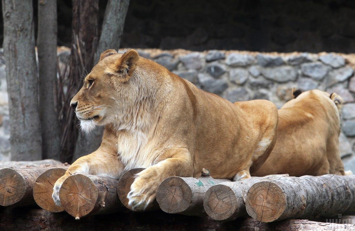 Зоологічний парк тимчасово закрили / фото УНІАН