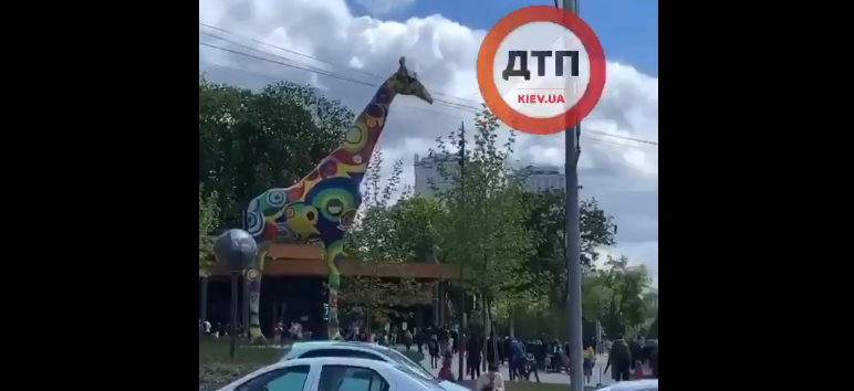 У столичного зоопарку - черга / Скріншот